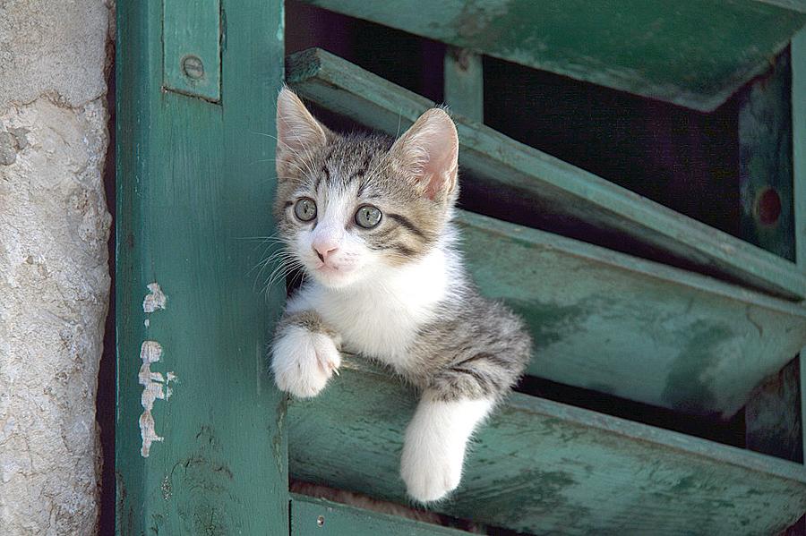 5a704fb7c7c737 Pomóż kotom przetrwać zimę. fot. Aleksander Dorda. fot. Aleksander Dorda