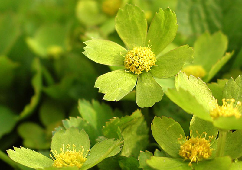 Tapety Tapety Wiosenne Tapety Wiosenne Kwiaty Drzewa Wiosenne  Apps